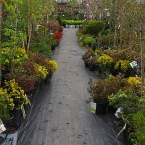 Royal Victorian Gardens